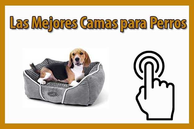 las mejores camas para perros